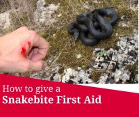 snakebite first aid